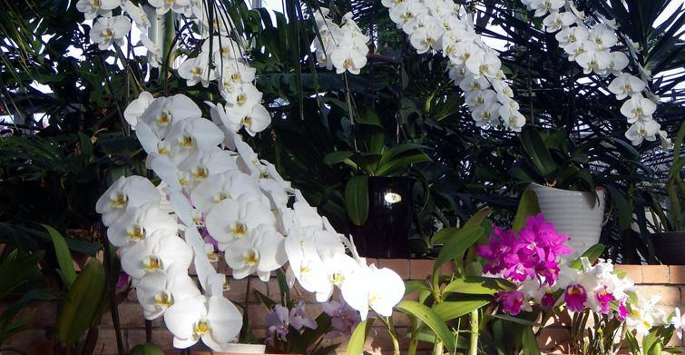 ラン 富山中央植物園 春と秋の桜 (2)