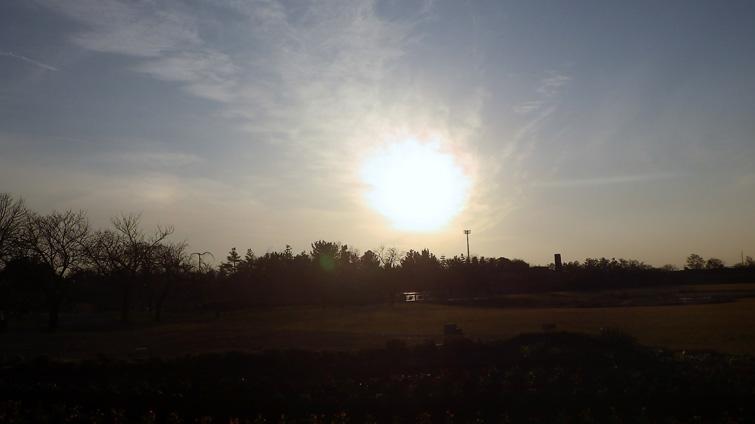 toyama_sakura (8)
