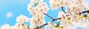 写真素材 春