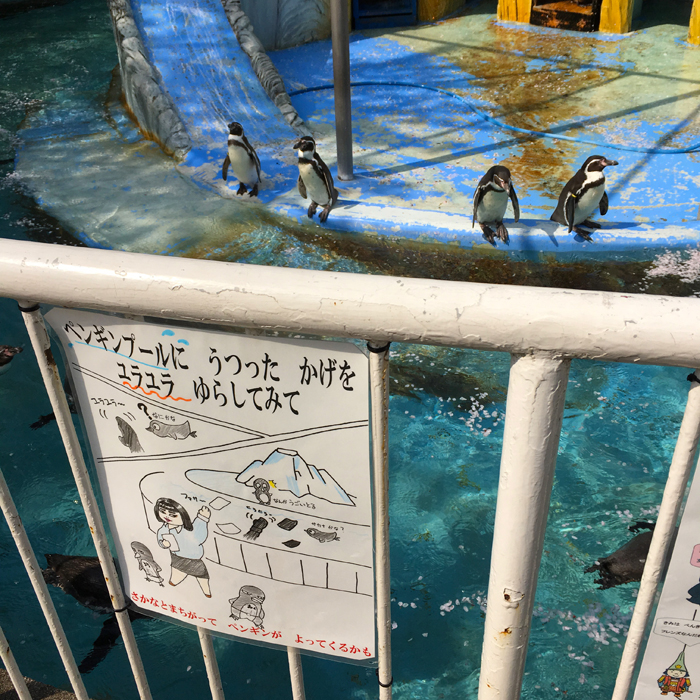 高岡古城公園動物園8