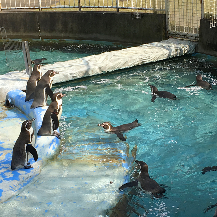 高岡古城公園動物園7