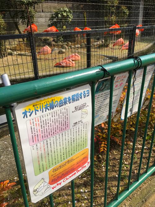 高岡古城公園動物園9