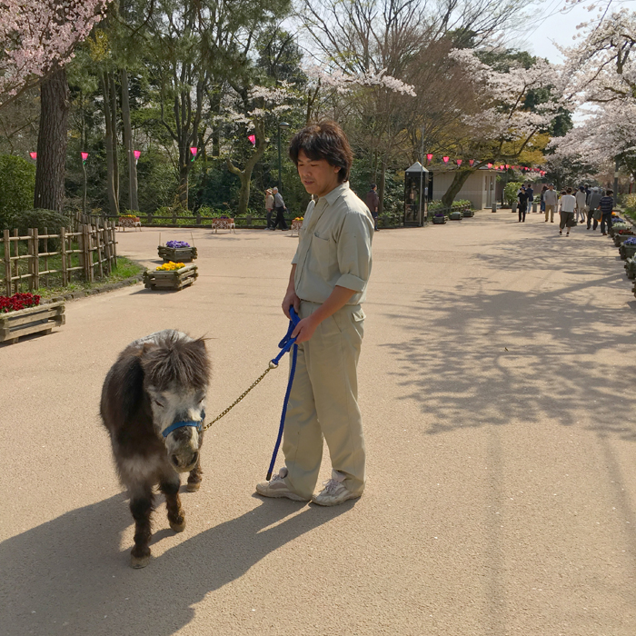 高岡古城公園動物園6