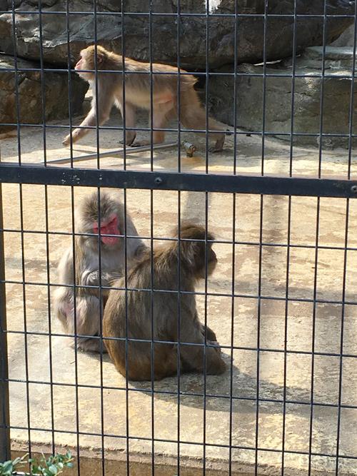 高岡古城公園動物園4