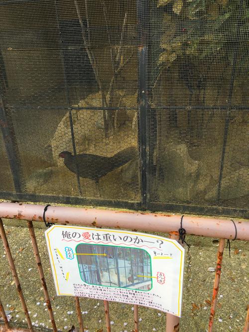 高岡古城公園動物園11