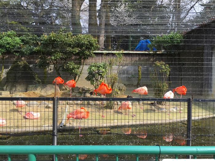 高岡古城公園動物園10